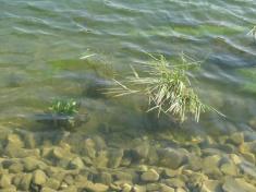 Vodní plocha